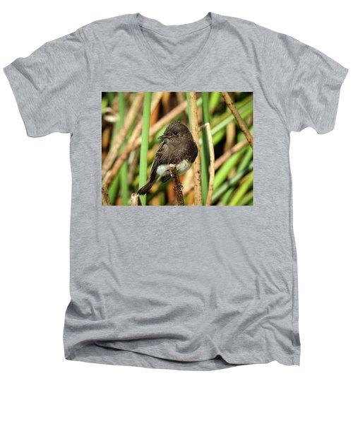 Black Phoebe Close Up Men's V-Neck T-Shirt