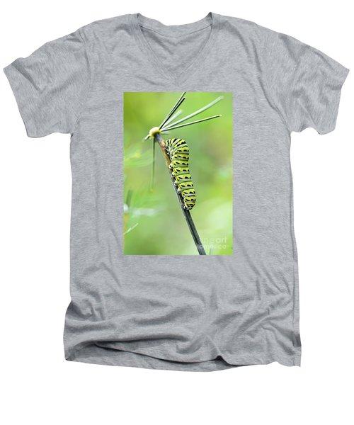Black Swallowtail Caterpillar Men's V-Neck T-Shirt by Debbie Green