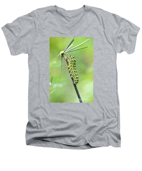 Black Swallowtail Caterpillar Men's V-Neck T-Shirt
