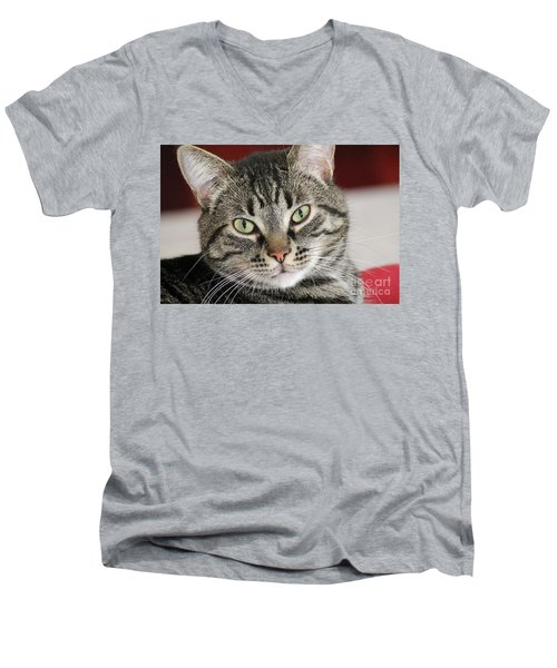 Black Tabby Men's V-Neck T-Shirt