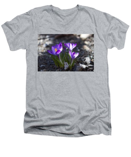 Blooming Crocus #3 Men's V-Neck T-Shirt by Jeff Severson