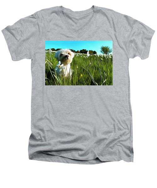 Blooming Daffodils In The Antola Park With Maltese I Paint Men's V-Neck T-Shirt
