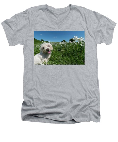 Blooming Daffodils In The Antola Park With Maltese II Men's V-Neck T-Shirt