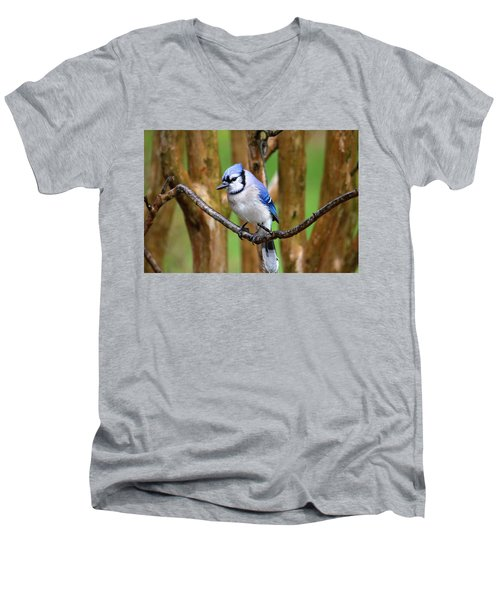 Blue Jay On A Branch Men's V-Neck T-Shirt