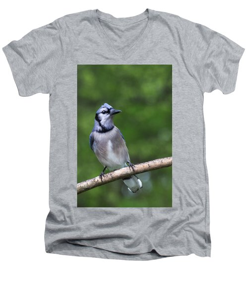 Blue Jay On Alert Men's V-Neck T-Shirt