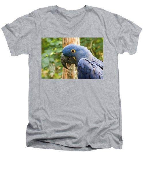 Blue Macaw Men's V-Neck T-Shirt