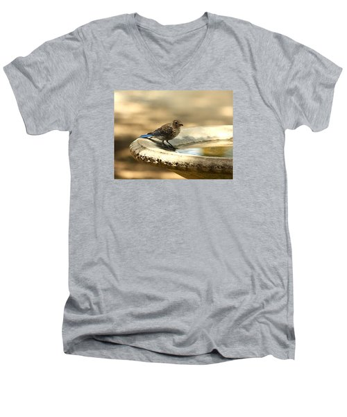 Men's V-Neck T-Shirt featuring the photograph Bluebird Bath Time by Sheila Brown