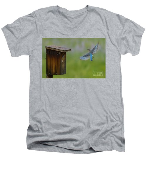 Bluebird Feeding Time Men's V-Neck T-Shirt