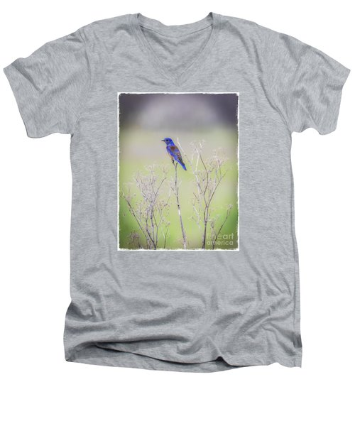Men's V-Neck T-Shirt featuring the photograph Bluebird On Hemlock by Mitch Shindelbower