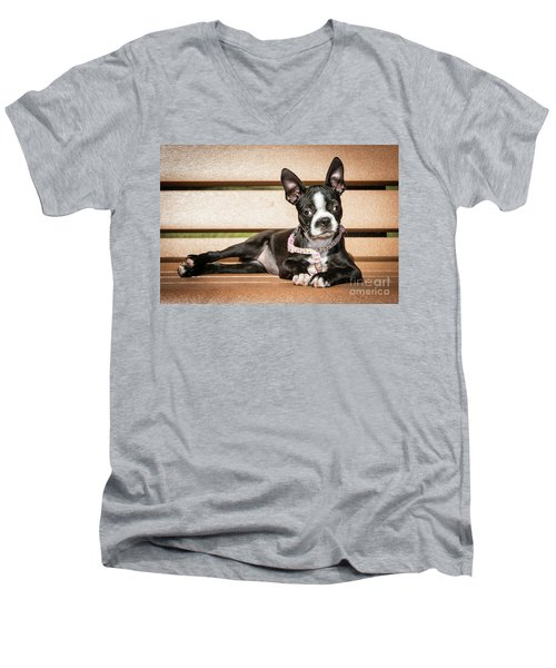 Boston Terrier Puppy Relaxing Men's V-Neck T-Shirt by Stephanie Hayes