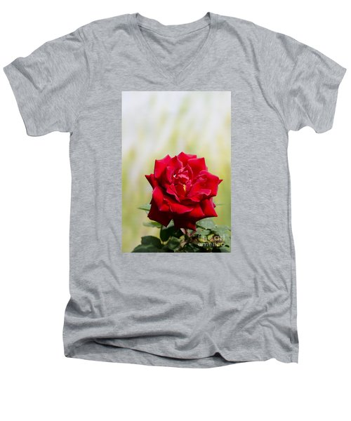 Bright Red Rose Men's V-Neck T-Shirt by Perry Van Munster