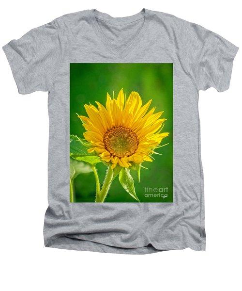 Bright Yellow Sunflower Men's V-Neck T-Shirt by Alana Ranney