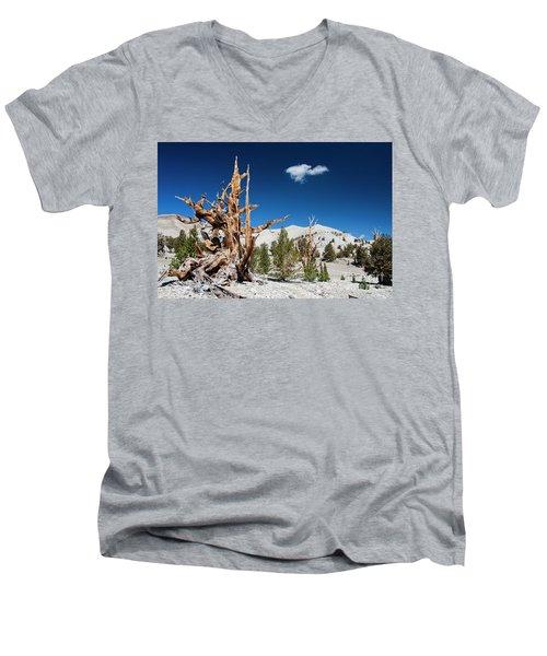 Bristlecone Pine - Pinus Longaeva Men's V-Neck T-Shirt