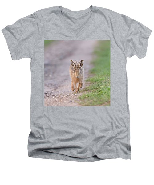 Brown Hare Approaching Down Track Men's V-Neck T-Shirt