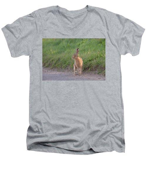 Brown Hare Listening Men's V-Neck T-Shirt