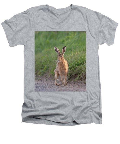 Brown Hare Sat On Track At Dawn Men's V-Neck T-Shirt