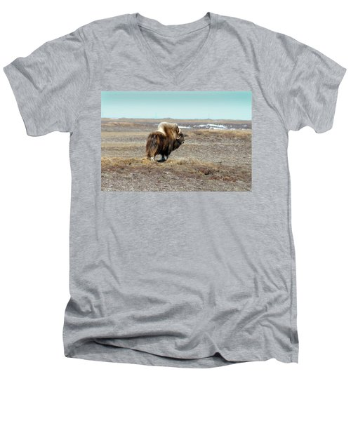 Bull Musk Ox Men's V-Neck T-Shirt