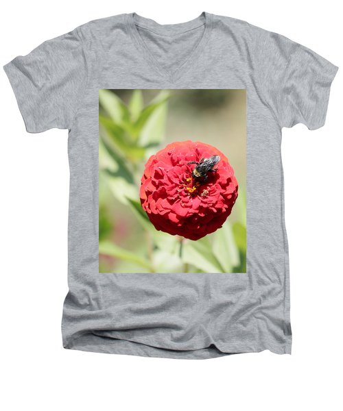 Bumble Bee On Zinnia Men's V-Neck T-Shirt