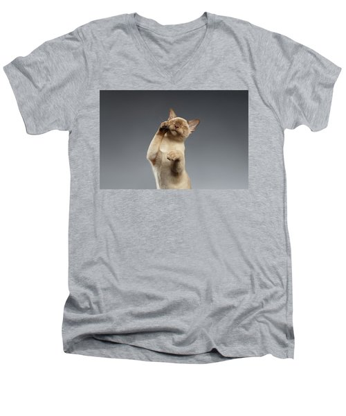 Burma Cat Paws Snout Covers On Gray Men's V-Neck T-Shirt