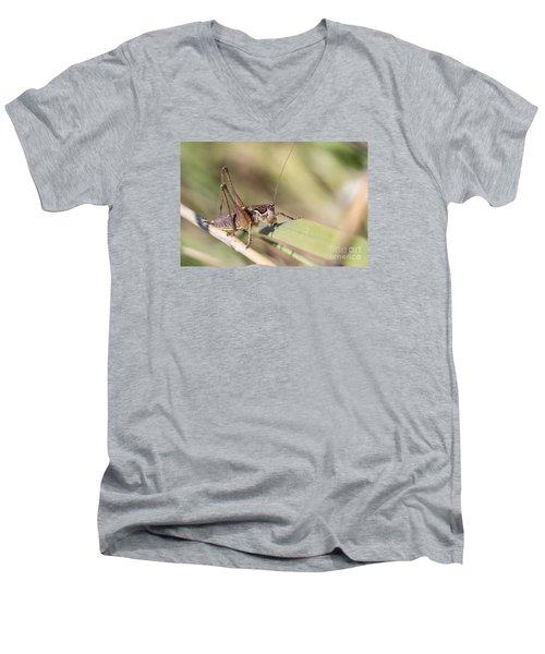 Men's V-Neck T-Shirt featuring the photograph Bush Cricket by Jivko Nakev