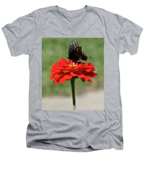 Butterfly On Red Zinnia Men's V-Neck T-Shirt