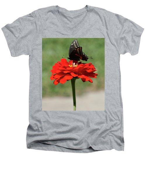 Butterfly On Red Zinnia Men's V-Neck T-Shirt