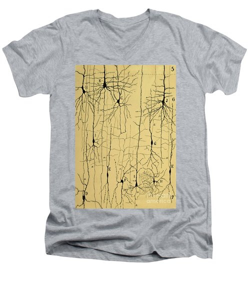 Cajal Drawing Of Microscopic Structure Of The Brain 1904 Men's V-Neck T-Shirt by Science Source