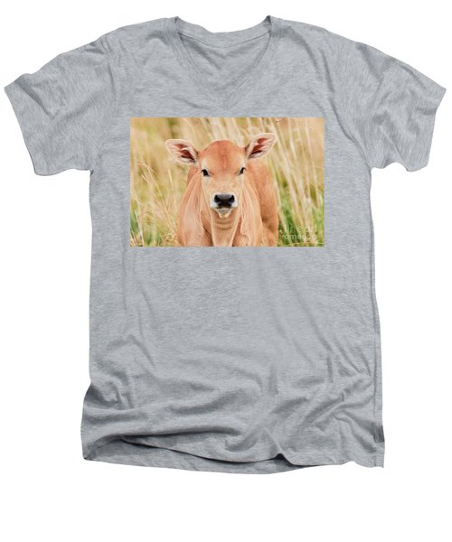 Calf In The High Grass Men's V-Neck T-Shirt