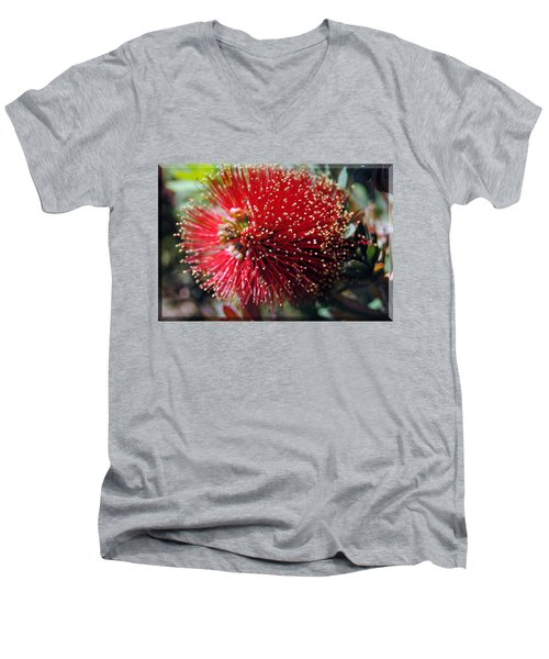 Callistemon - Bottle Brush T-shirt 5 Men's V-Neck T-Shirt by Isam Awad