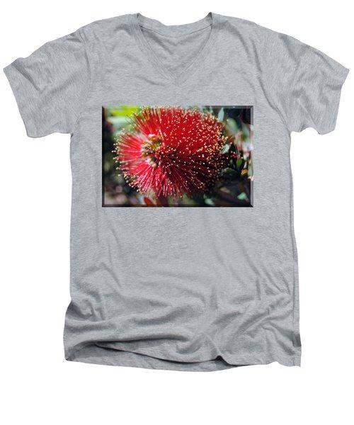 Callistemon - Bottle Brush T-shirt 5 Men's V-Neck T-Shirt