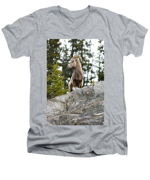Canadian Bighorn Side Profile Men's V-Neck T-Shirt