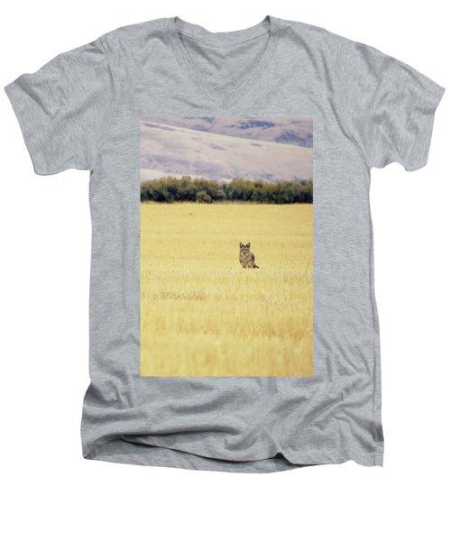Canidae Men's V-Neck T-Shirt