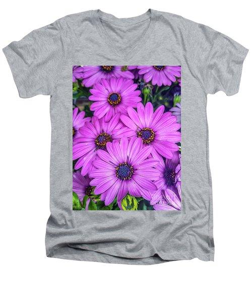 Cape Daisys - Purple Men's V-Neck T-Shirt