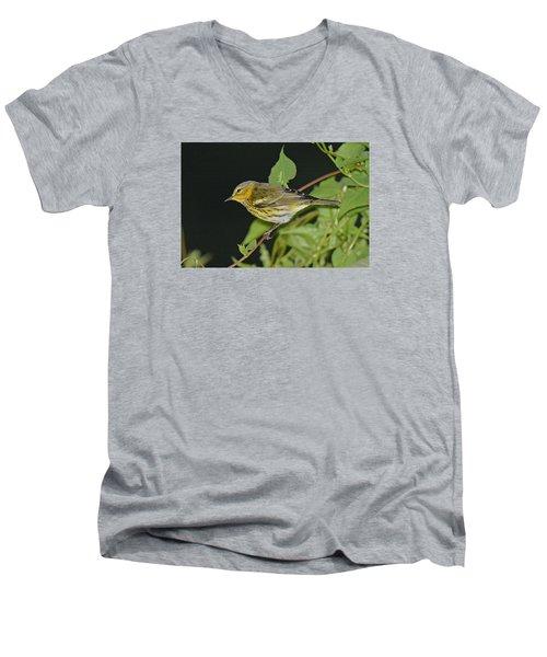 Cape May Warbler Men's V-Neck T-Shirt by Alan Lenk