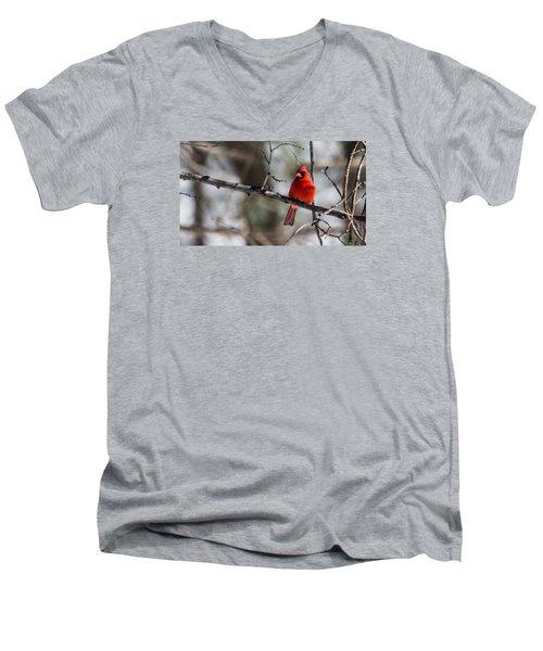 Men's V-Neck T-Shirt featuring the photograph Cardinal by Dan Traun