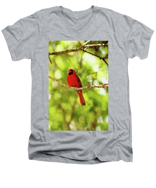 Cardinal Stare Men's V-Neck T-Shirt
