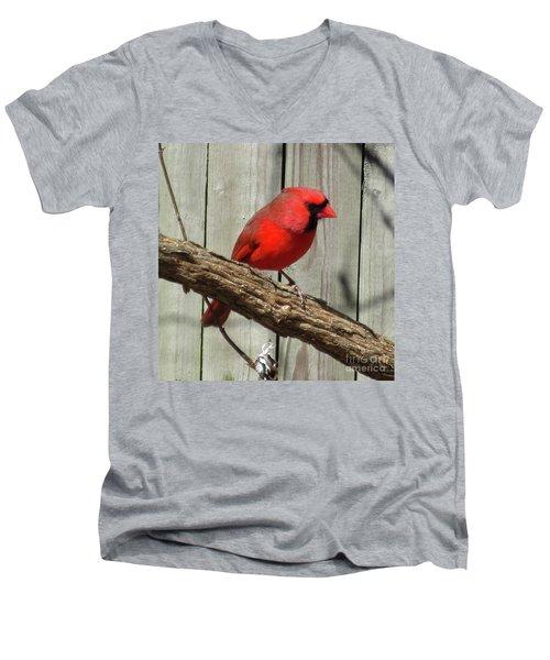 Cardinal Waiting For Spring Men's V-Neck T-Shirt