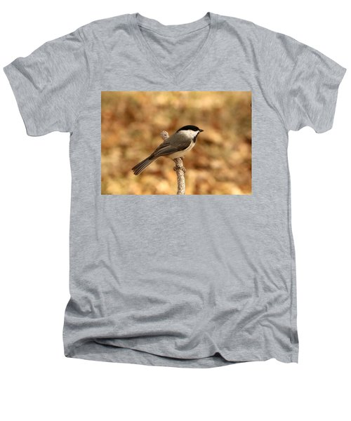 Carolina Chickadee On Branch Men's V-Neck T-Shirt