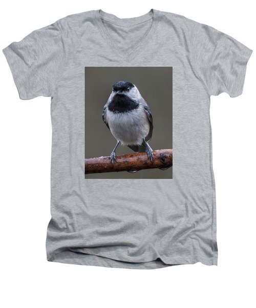 Carolina Chickadee Portrait Men's V-Neck T-Shirt