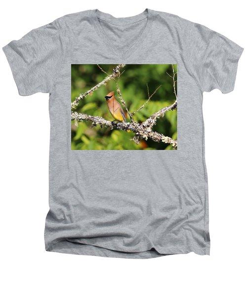 Cedar Waxwing  Men's V-Neck T-Shirt by Carol R Montoya