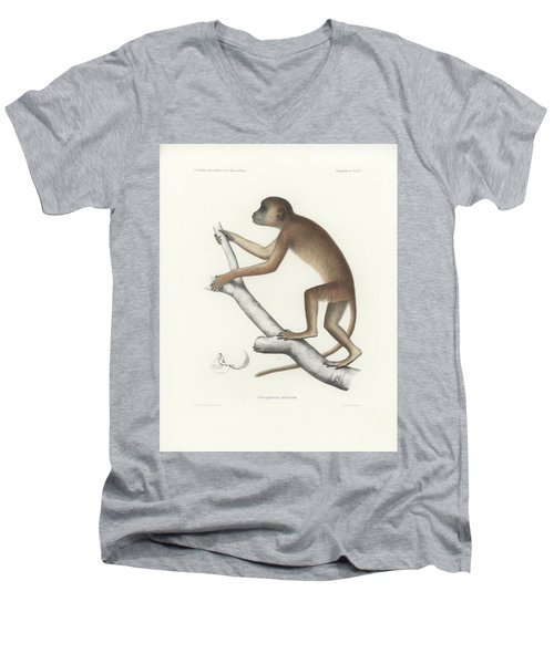 Central Yellow Baboon, Papio C. Cynocephalus Men's V-Neck T-Shirt by J D L Franz Wagner