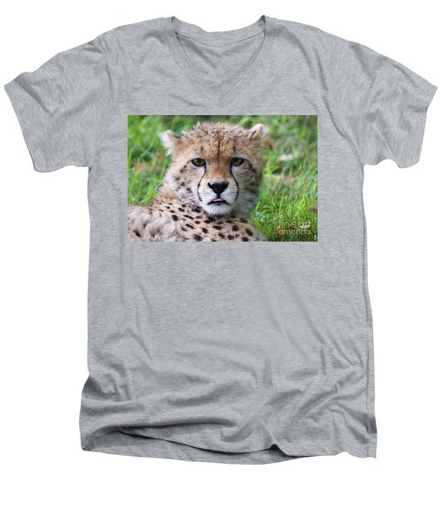 Men's V-Neck T-Shirt featuring the photograph Cheetah by MGL Meiklejohn Graphics Licensing