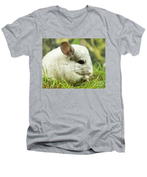 Chinchilla Men's V-Neck T-Shirt