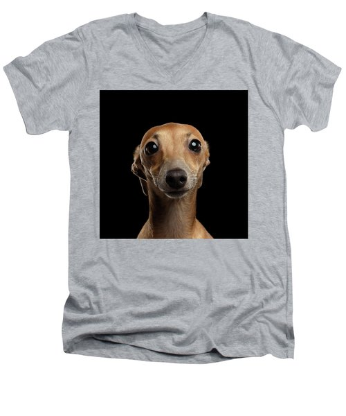 Closeup Portrait Italian Greyhound Dog Looking In Camera Isolated Black Men's V-Neck T-Shirt