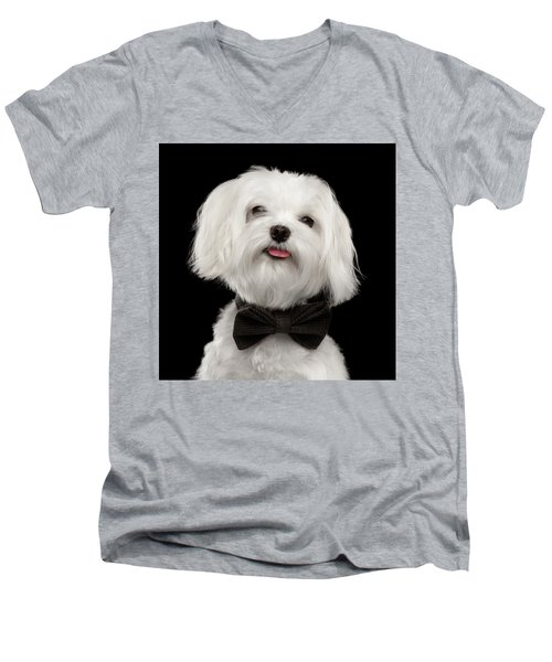 Closeup Portrait Of Happy White Maltese Dog With Bow Looking In Camera Isolated On Black Background Men's V-Neck T-Shirt