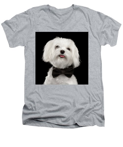 Men's V-Neck T-Shirt featuring the photograph Closeup Portrait Of Happy White Maltese Dog With Bow Looking In Camera Isolated On Black Background by Sergey Taran
