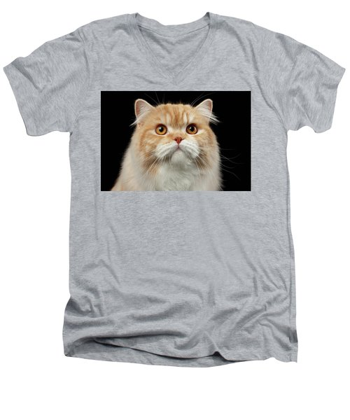 Closeup Portrait Of Red Big Persian Cat Angry Looking On Black Men's V-Neck T-Shirt