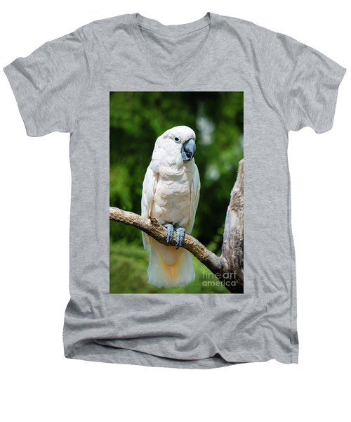 Cockatoo Men's V-Neck T-Shirt