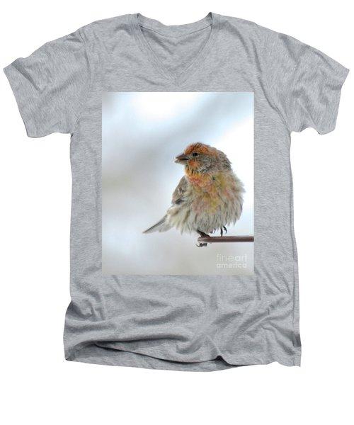 Colorful Finch Eating Breakfast Men's V-Neck T-Shirt