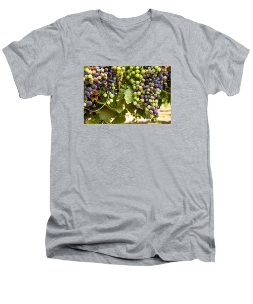 Colorful Red Wine Grape Men's V-Neck T-Shirt